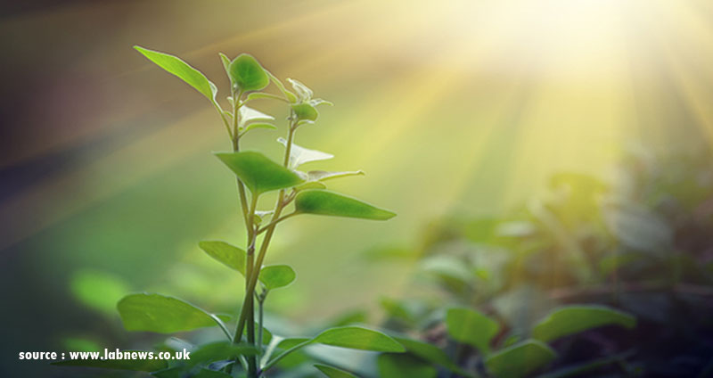 5 Reasons Why Photosynthesis Is Important